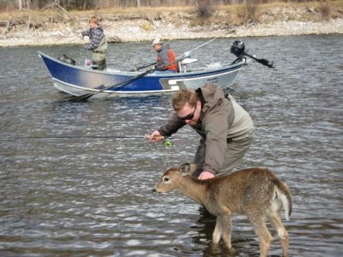 Faon et pêcheur.jpg